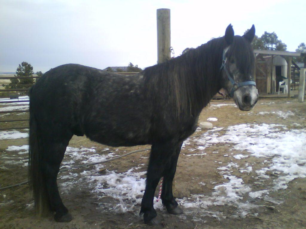 bono.jan.2011